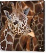 Giraffe - Camouflage Acrylic Print