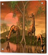 Giraffe Family By John Junek Acrylic Print