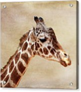 Giraffe Portrait With Texture Acrylic Print