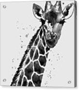 Giraffe In Black And White Acrylic Print
