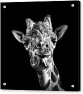 Giraffe In Black And White Acrylic Print by Malcolm MacGregor