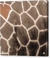 Giraffe Love Acrylic Print