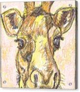 Giraffe Postcard Acrylic Print