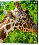 Giraffe Profile Acrylic Print