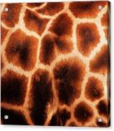 Giraffe Texture Acrylic Print