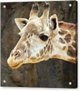 Giraffe Up Close Acrylic Print