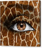 Giraffe Acrylic Print by Yosi Cupano