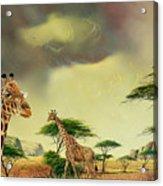 Giraffes At Thabazimba Acrylic Print