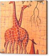 Giraffes Feeding Acrylic Print