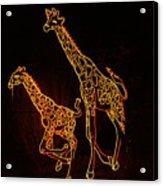 Giraffes Light Show  Acrylic Print