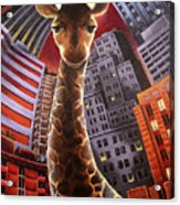 Giraffes Often Starve In Babylon Acrylic Print