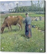 Girl Tending A Cow In Pasture Acrylic Print by Camille Pissarro