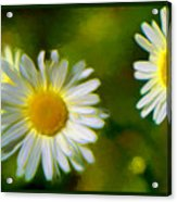 Give Me Daisy In Color Acrylic Print