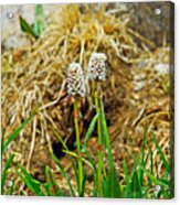 Glacial Wildflowers Acrylic Print