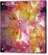 Glad Chiffon 3004 Idp_2 Acrylic Print