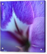 Gladiola Close-up Acrylic Print by Kathy Yates