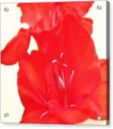 Gladiola Stem Acrylic Print