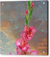 Gladiola Sunset Acrylic Print