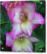 Gladiolas Blooming With Ripening Blueberries Acrylic Print