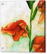 Gladiolas Acrylic Print