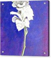 Gladiolus 1 Acrylic Print