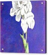 Gladiolus 2 Acrylic Print