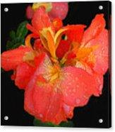 Gladiolus Bloom - Digital Art Acrylic Print