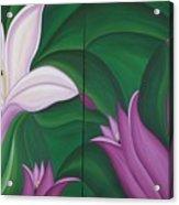 Gladiolus Carneus Acrylic Print