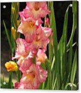 Gladiolus Acrylic Print