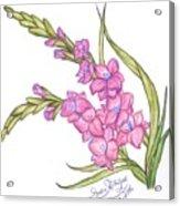 Gladiolus Pink Acrylic Print