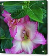 Gladys Blooms In A Blueberry Bush Acrylic Print