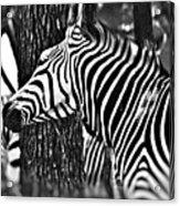 Glamorous In Black And White Acrylic Print