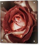 Glamorous Rose Acrylic Print
