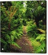 Glanleam, Co Kerry, Ireland Pathway Acrylic Print