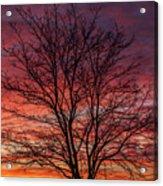 Glen Iris Sunrise Acrylic Print
