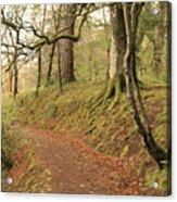 Glengarry Forest Scotland Acrylic Print