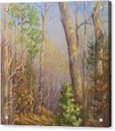Glenmoor Woods, Sunset Acrylic Print