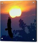 Gliding By The Sun Acrylic Print