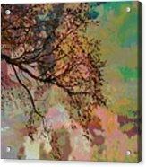 Glimpse Acrylic Print