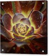 Glistening Glowing Garden Jewel Acrylic Print