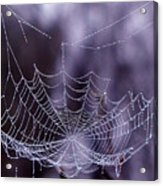 Glistening Web Acrylic Print