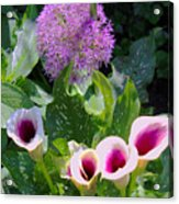 Globe Thistle And Calla Lilies Acrylic Print by Corey Ford