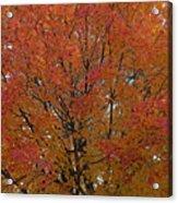 Glorious Autumn Acrylic Print