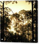 Glorious Dawn Acrylic Print