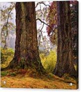 Glorious Fall In Benmore Botanical Garden. Scotland Acrylic Print