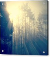 Glorious Morning Light Acrylic Print