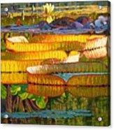 Glorious Morning Lilies Acrylic Print