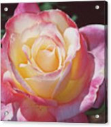 Glorious Pink Rose Acrylic Print