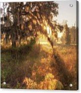 Glorious Sunrise At The Oak Tree Acrylic Print