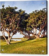 Glory In The Morning Pntb Acrylic Print